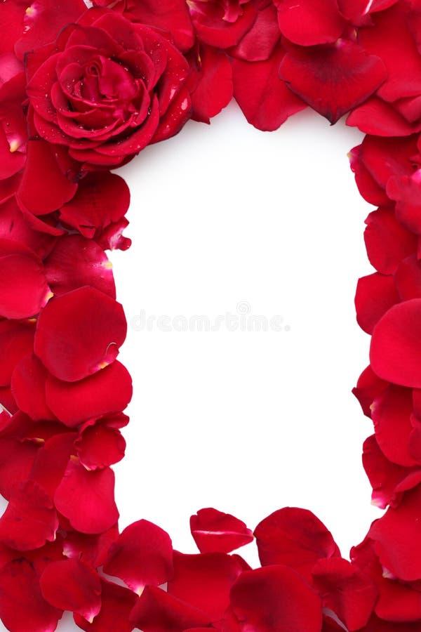 De mooie bloemblaadjes van rode rozen en namen toe royalty-vrije stock afbeeldingen