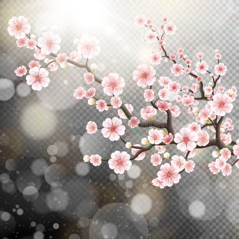 De mooie bloemen van malplaatjesakura Eps 10 royalty-vrije illustratie