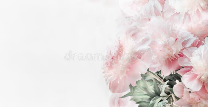 De mooie bloemen van pastelkleur roze pioenen op witte achtergrond, vooraanzicht Bloemengrens of Lay-out of groetkaart royalty-vrije stock foto's