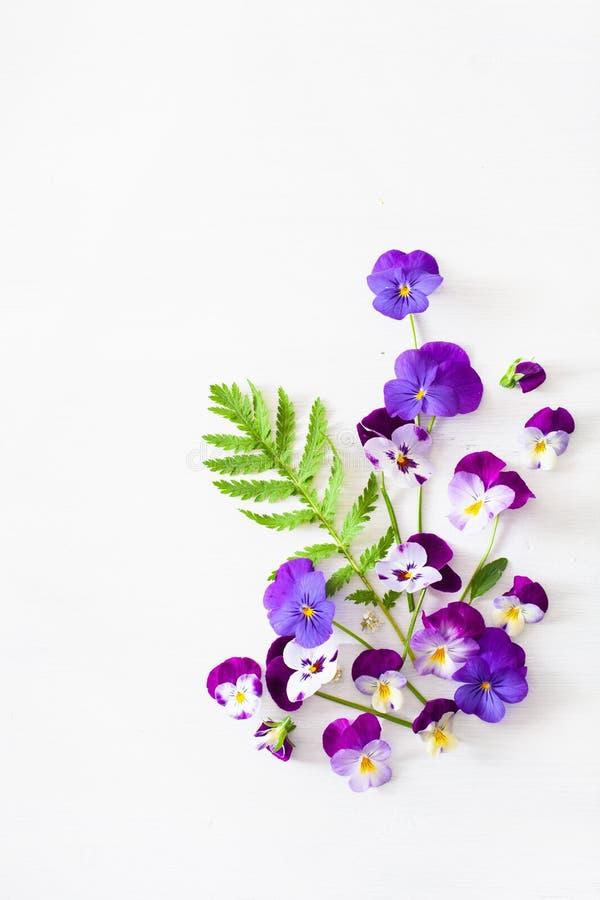De mooie bloemen van de viooltjezomer flatlay op wit royalty-vrije stock afbeelding