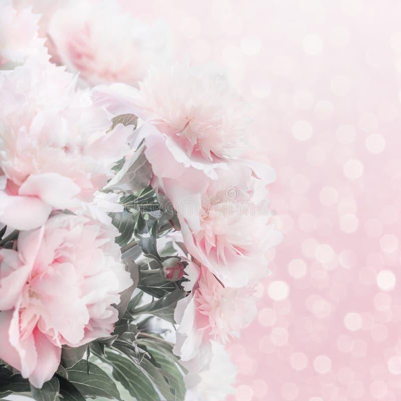 De mooie bloemengrens van pastelkleur roze pioenen met bokeh Lay-out of groetkaart voor Moedersdag royalty-vrije stock afbeeldingen