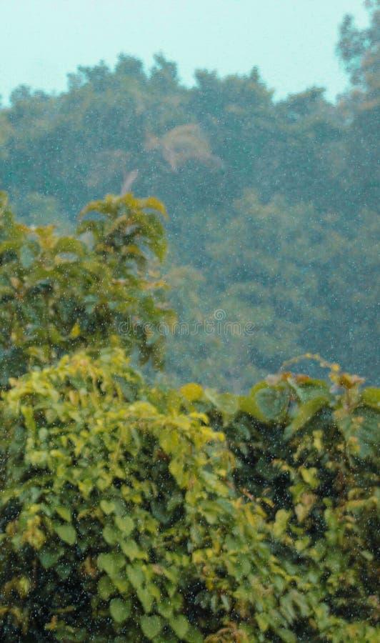 De mooie bomen van de regenaard stock fotografie