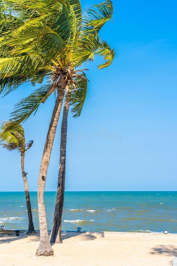 De mooie boom van het Kokosnotenpalmblad met strandoverzees en oceaan op blauwe hemel stock afbeeldingen