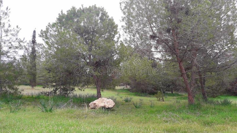 De mooie bos de aardbomen van het kalmtepark schommelen naast het zoute meer de Vakanties van Larnaca Cyprus royalty-vrije stock afbeelding