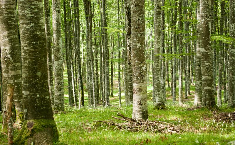 De mooie bossen van Cansiglio en Col. Indes in Alpago, Belluno Italië stock afbeeldingen