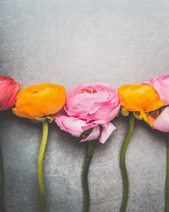 De mooie boterbloemenbloemen op grijze achtergrond, sluiten omhoog royalty-vrije stock fotografie