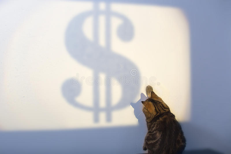 De mooie Britse kat probeert om Dolar-concept succes, bedrijfsstrategie te vangen royalty-vrije stock foto