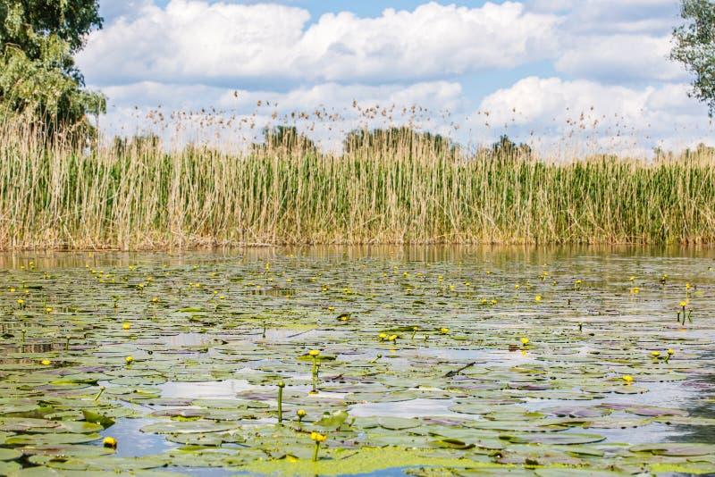 De mooie Delta van Donau stock afbeelding