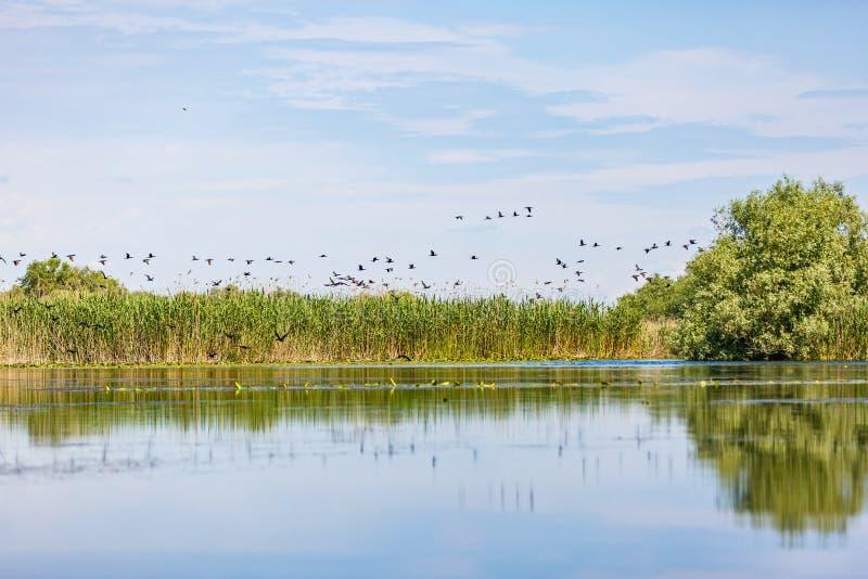 De mooie Delta van Donau royalty-vrije stock afbeelding