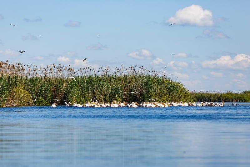 De mooie Delta van Donau stock afbeeldingen