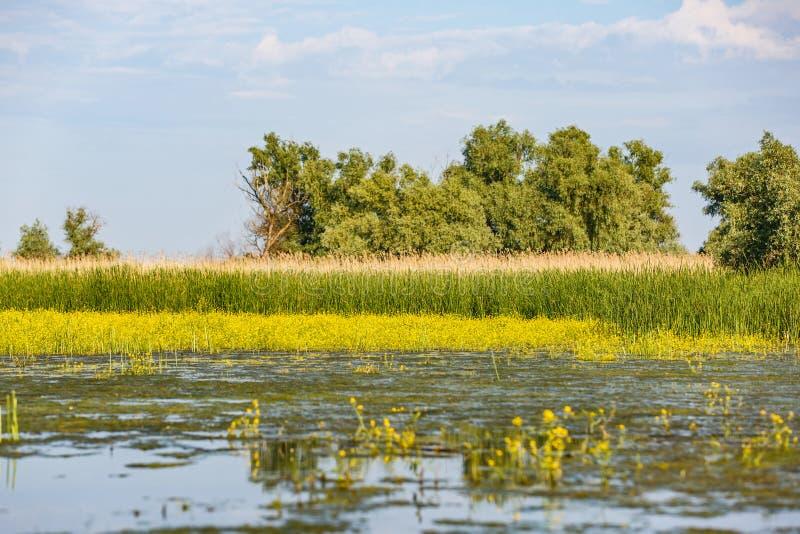 De mooie Delta van Donau royalty-vrije stock afbeeldingen