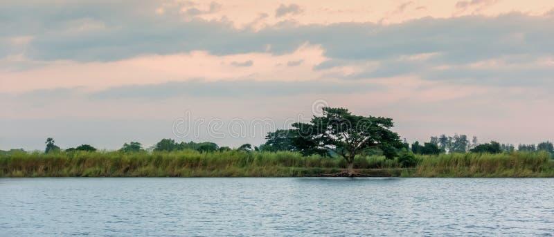 De mooie eenzame boom in groene weide heeft bank beide kantenvoorzijde royalty-vrije stock afbeeldingen