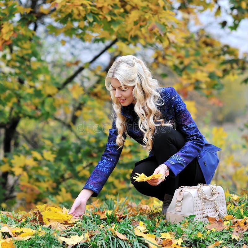 De mooie elegante vrouw verzamelt bladeren in een park in de herfst stock afbeeldingen