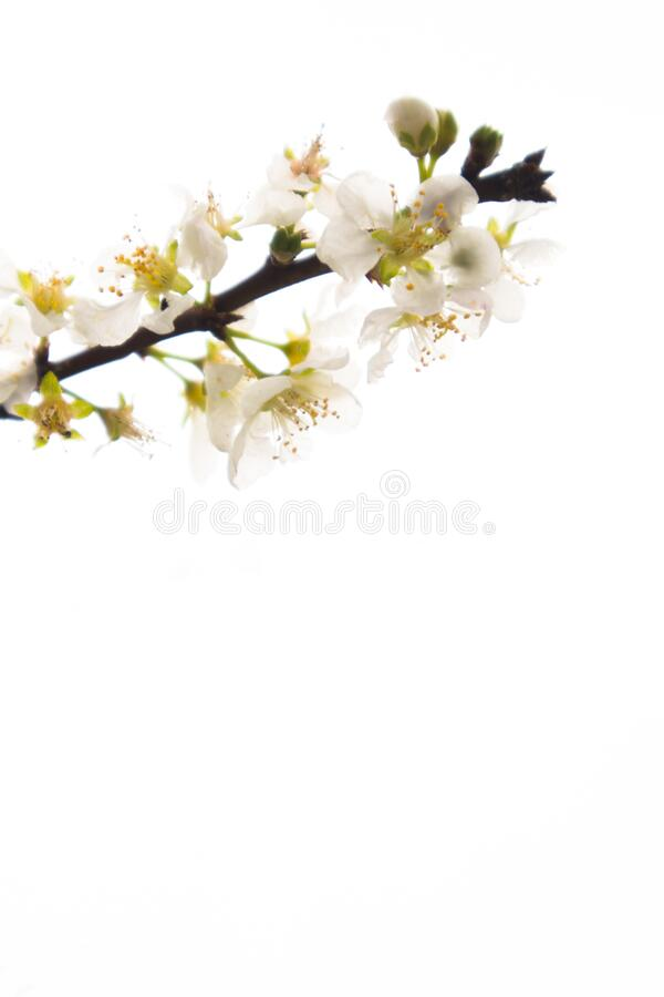 De mooie en verse bloem stock foto's