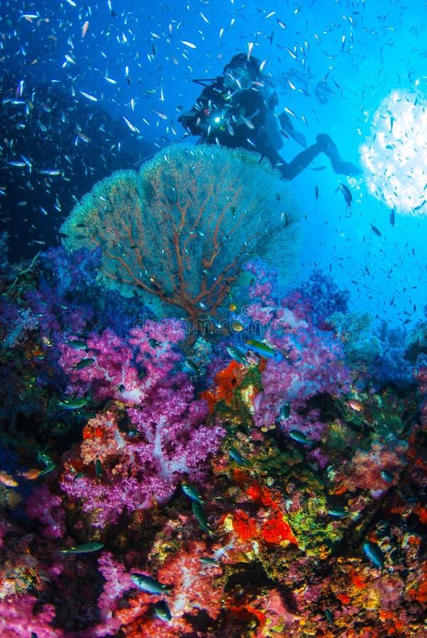 De mooie ertsader van de koraaltuin met Scuba-duiker royalty-vrije stock fotografie