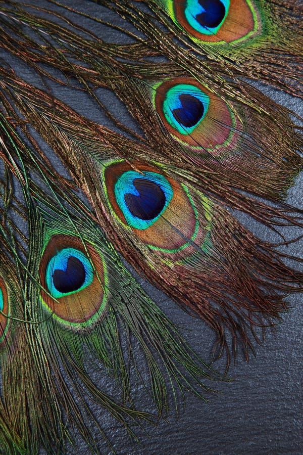 De mooie exotische ogen van de pauwveer stock foto's
