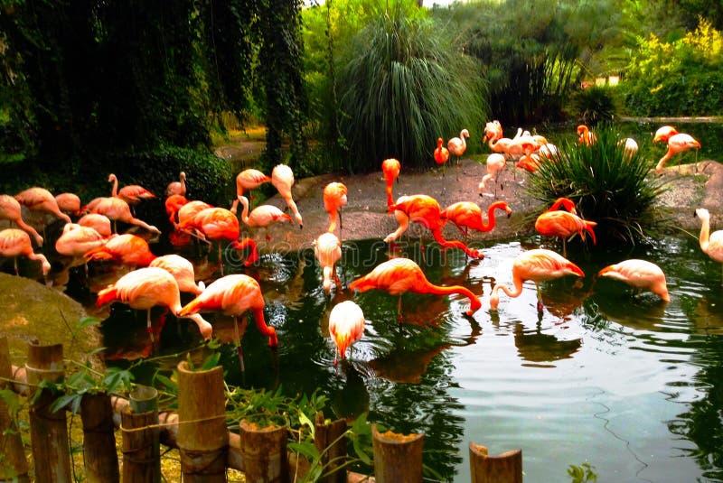 De mooie flamingo's royalty-vrije stock afbeelding