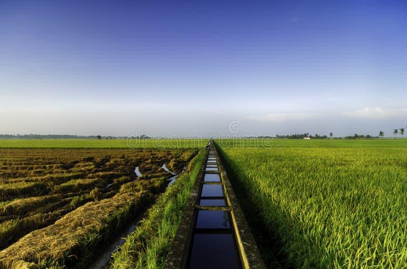 De mooie gebieden van de meningspadie bij ochtend concreet waterkanaal en enige boom voor de irrigatie van het padiepadieveld royalty-vrije stock afbeelding
