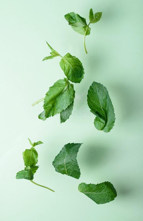 De mooie geurige vlieg van muntbladeren op een groene achtergrond Ernsteffect royalty-vrije stock afbeelding