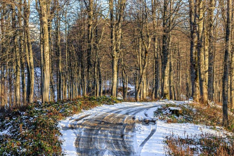 De mooie de herfstsneeuw behandelde de bergbos van de Kaukasus met naakte beukbomen bij zonsondergang met verdwijnende landelijke stock afbeelding