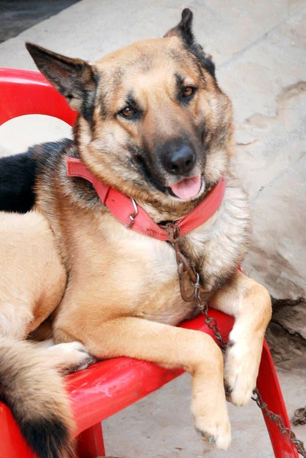 De mooie hond ziet eruit en neemt rust royalty-vrije stock foto