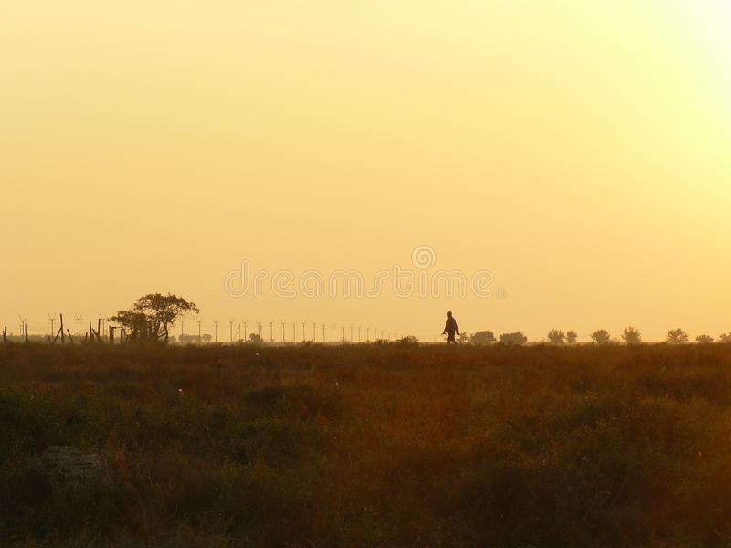 De mooie horizon van de de zomerochtend stock foto's