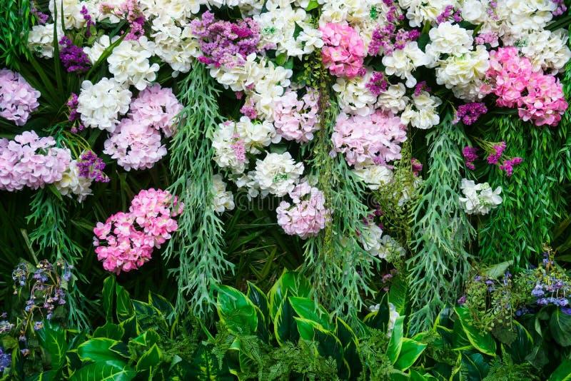 De mooie Hydrangea hortensia bloeit muur met verscheidenheid van bloemen royalty-vrije stock foto