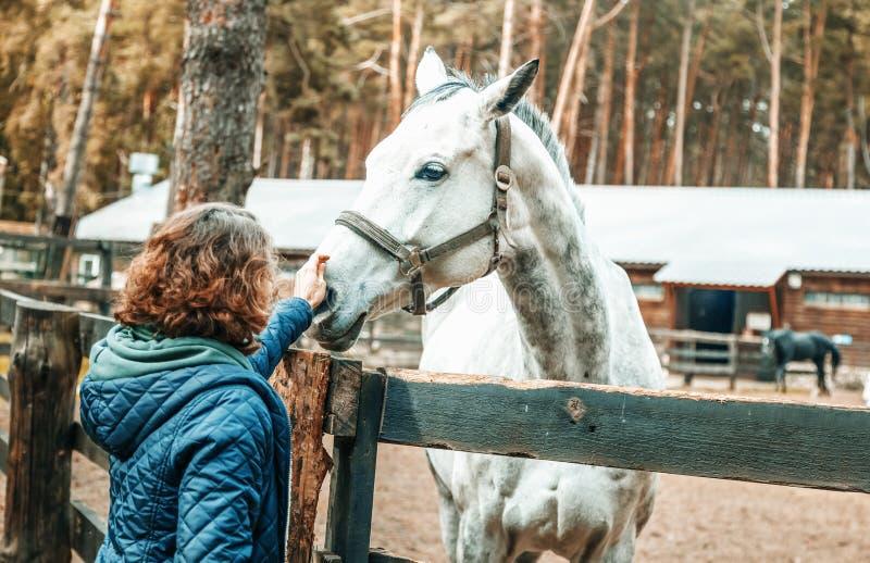 De mooie jonge vrouw die de neus van een grijs paard strijken, houdt van stock afbeelding