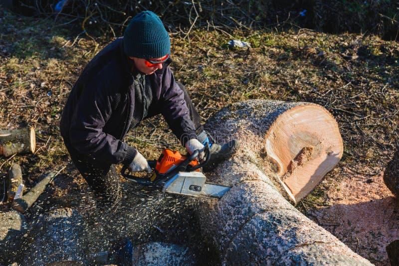 De mooie jonge vrouw in glazen snijdt een grote boom van as op hout voor de winter stock foto's