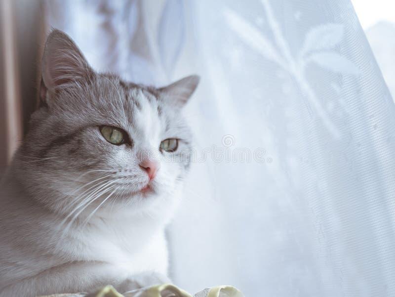 De mooie kat met grote groene ogen kijkt aan de kant stock foto's