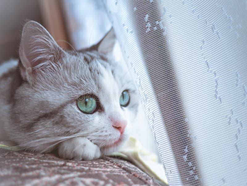 De mooie kat met grote groene ogen kijkt aan de kant royalty-vrije stock foto's