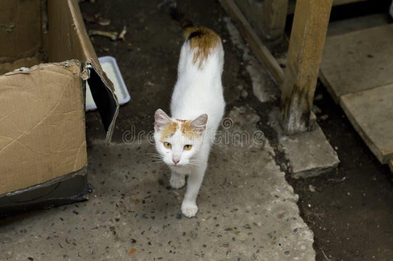 De mooie kat van de gember verdwaalde straat royalty-vrije stock foto