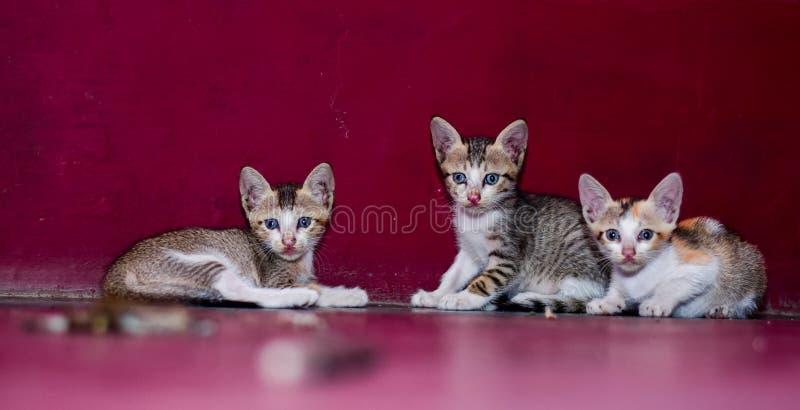 De mooie katjes zetten op de vloer royalty-vrije stock afbeeldingen