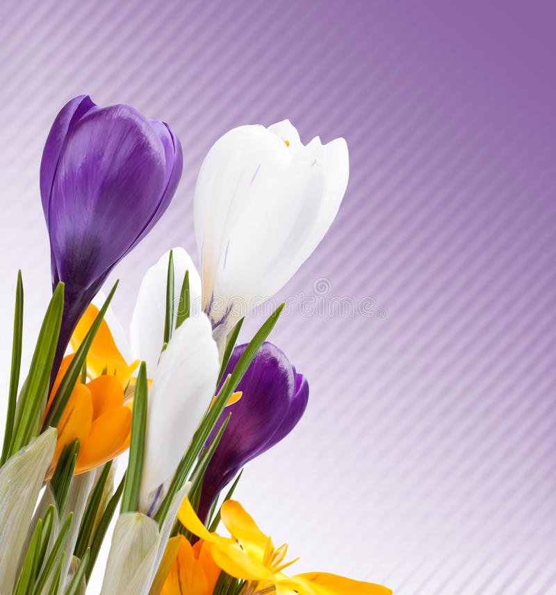 De mooie lente bloeit achtergrond royalty-vrije stock foto