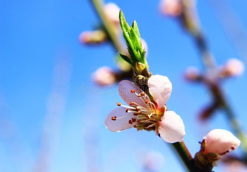 Download De mooie lente bokeh stock foto. Afbeelding bestaande uit sluit - 39106710