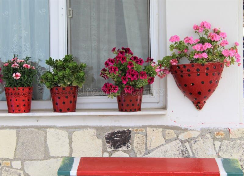 De mooie de lentebloemen zijn tot bloei komend royalty-vrije stock fotografie