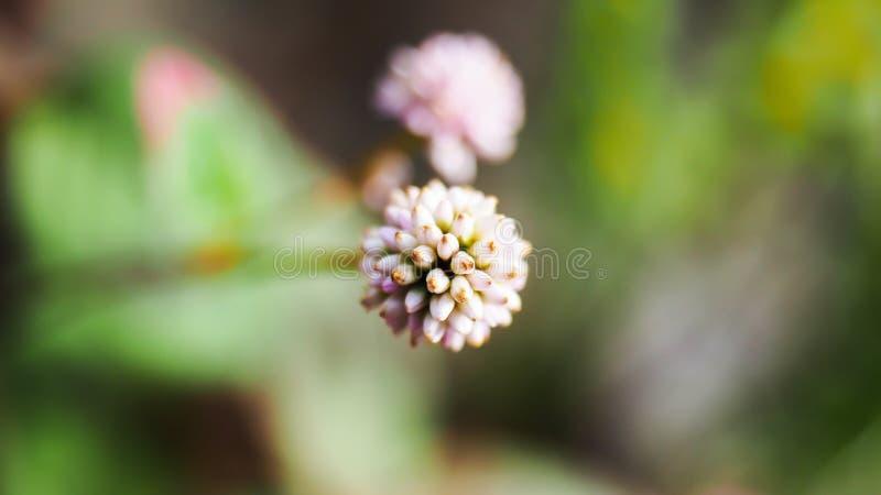 De mooie macrospruit van de bloemclose-up royalty-vrije stock afbeelding