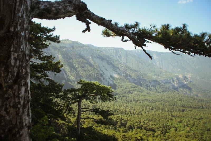 De mooie mening van berg AI-Petri de bergen en het overzees van de Krim Het overzeese landschap van de berg en stock foto's