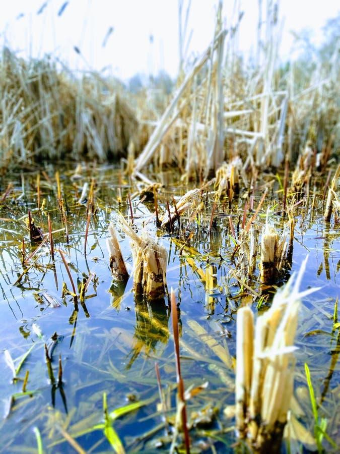 De mooie mening van de meerkust in een de lentetijd Natuurlijke schoonheid van aard royalty-vrije stock fotografie