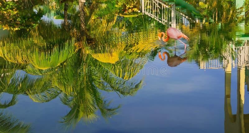De mooie mening van tropische tuin dacht in waterbovenkant na - neer met roze flamingovogel lopend in water royalty-vrije stock foto's