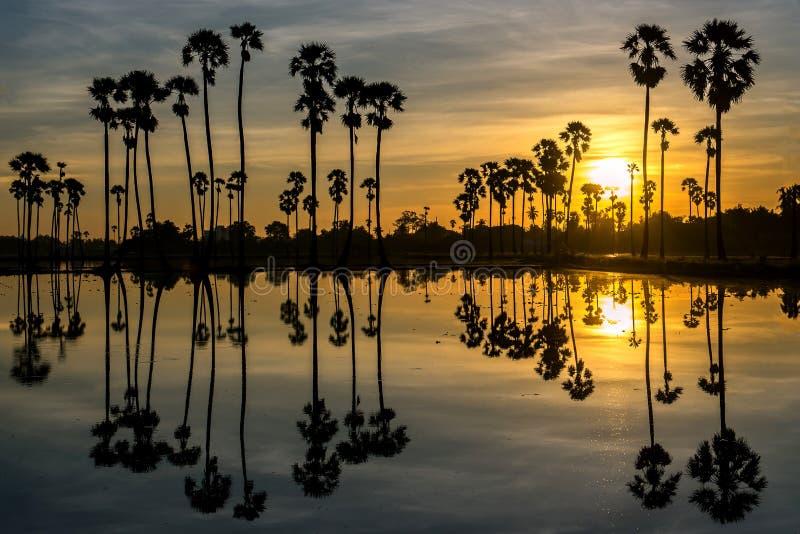 De mooie Palm van zonsondergangsilhouetten stock foto