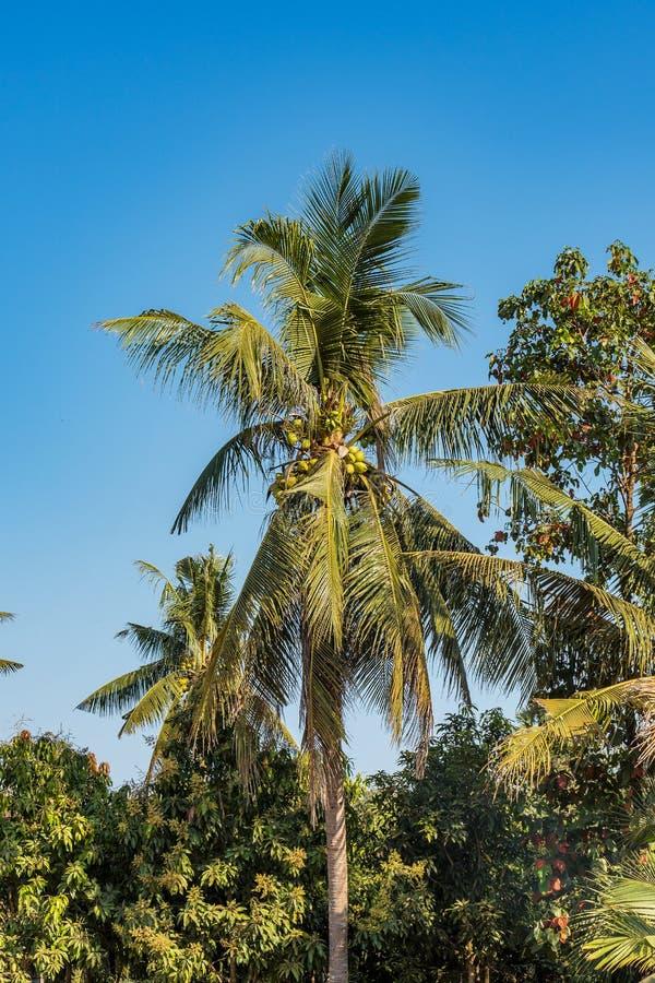 De mooie Plattelandsreis in tropisch platteland, Siem oogst, Kambodja stock foto