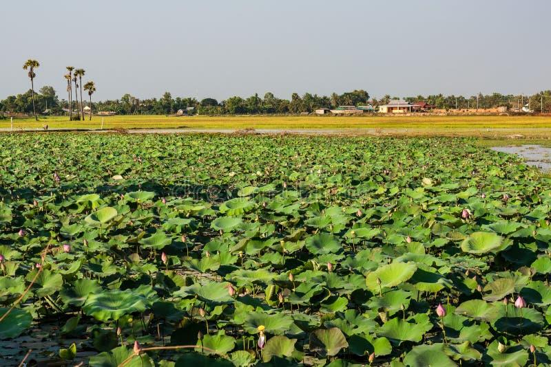 De mooie Plattelandsreis in tropisch platteland, Siem oogst, Kambodja stock foto's