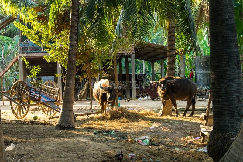 De mooie Plattelandsreis in tropisch platteland, Siem oogst, Kambodja royalty-vrije stock afbeelding