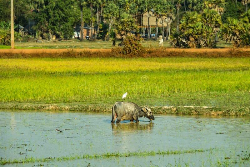 De mooie Plattelandsreis in tropisch platteland, Siem oogst, Kambodja royalty-vrije stock fotografie