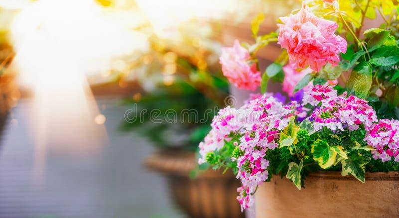 De mooie potten van de terrasbloem op balkon in zonlicht royalty-vrije stock fotografie