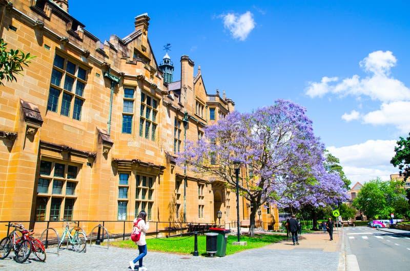De mooie purpere bloem die van Jacaranda dichtbij het historische gebouw in Sydney University in de lentetijd bloeien royalty-vrije stock afbeeldingen