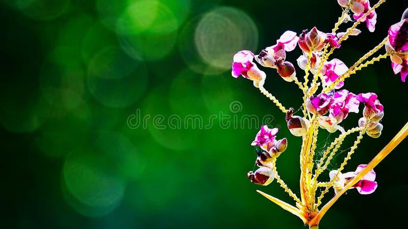 De mooie purpere bloemen op samenvatting vertroebelden groene achtergrond met natuurlijke bokehsamenvatting en achtergrond royalty-vrije stock afbeelding