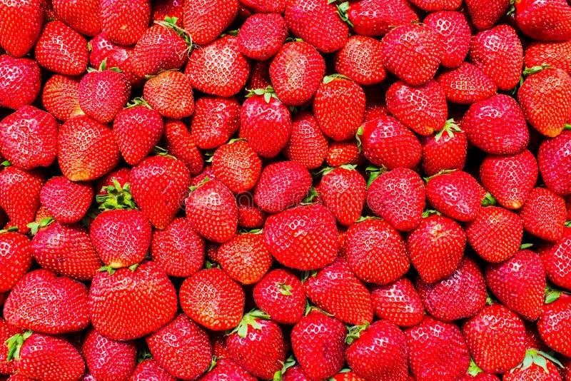 De mooie rijpe aardbeien sluiten omhoog Smakelijke bessen voor gezonde voedingmacro Vitamineconcept royalty-vrije stock foto