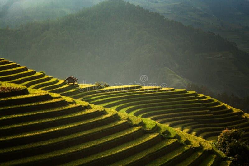 De mooie rijstterrassen stock foto